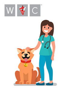 veterinarian-dog355